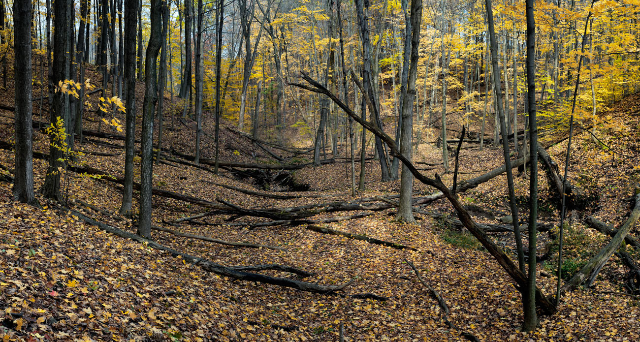 Niagara Escarpment Woods #8 by Janusz Wrobel